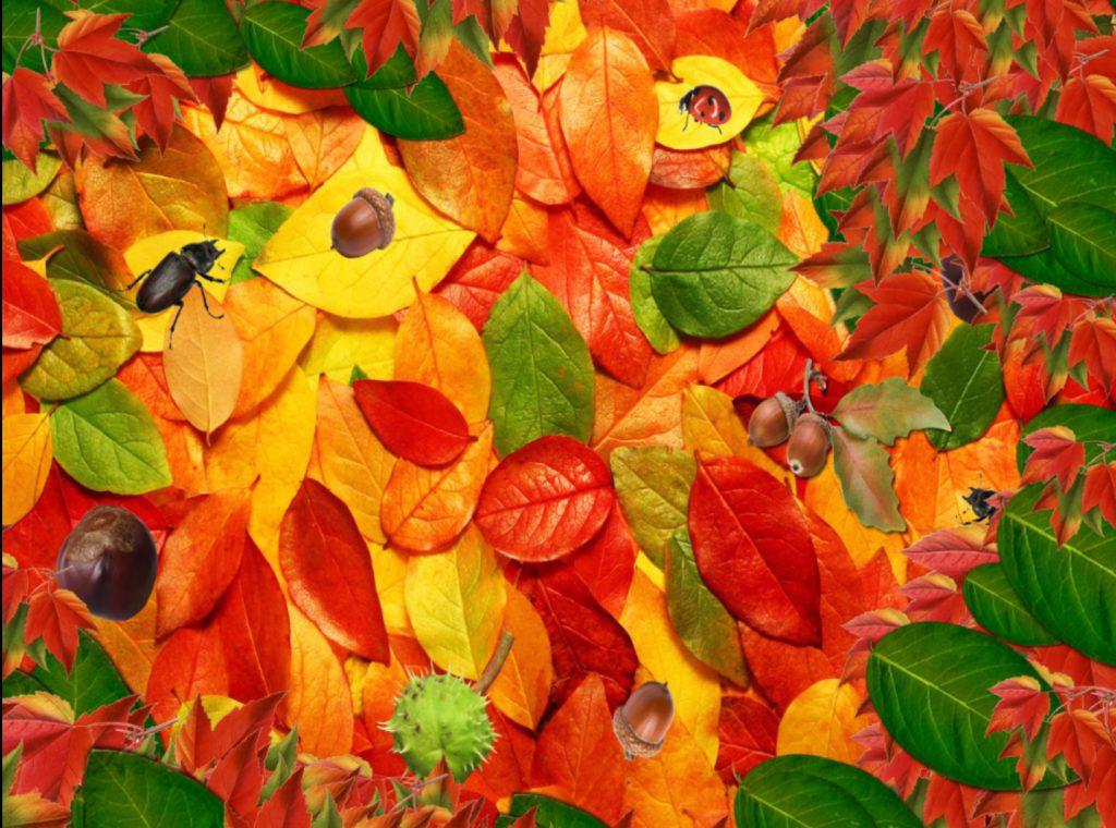 autumn leaves nature activity care suite